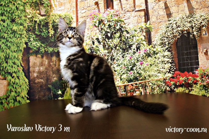 Yaroslav Victory, 3 месяца
