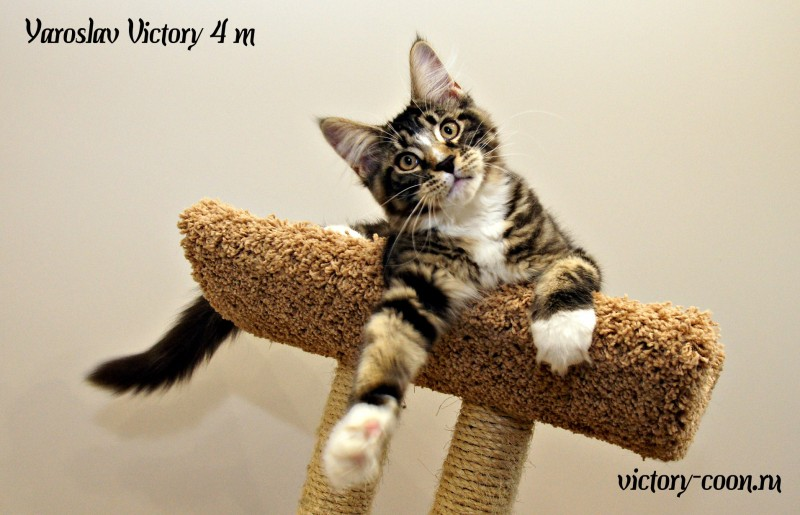 Yaroslav Victory, 4 месяца