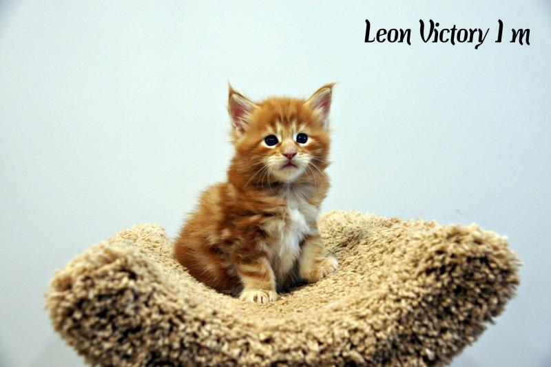 Leon Victory, 1 m