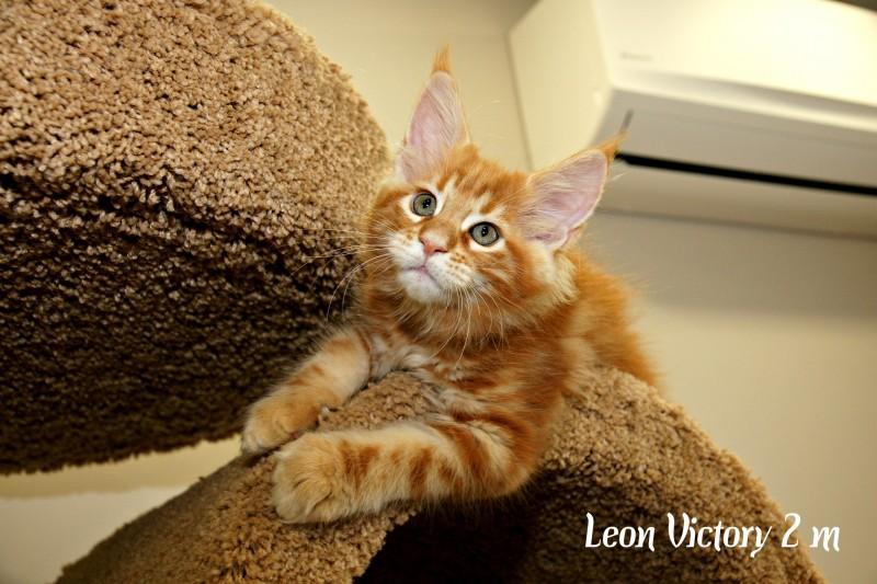Leon Victory, 2 месяца
