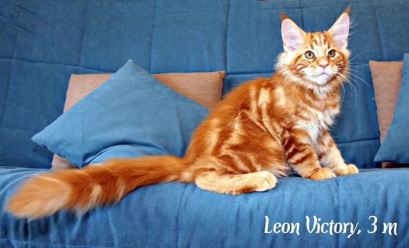 Leon Victory, 3 месяца