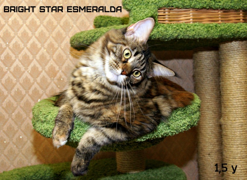 Bright Star Esmeralda, 1,5 y
