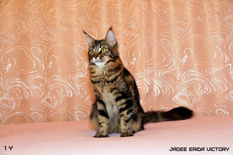 Первая кошка нашего разведения Рида