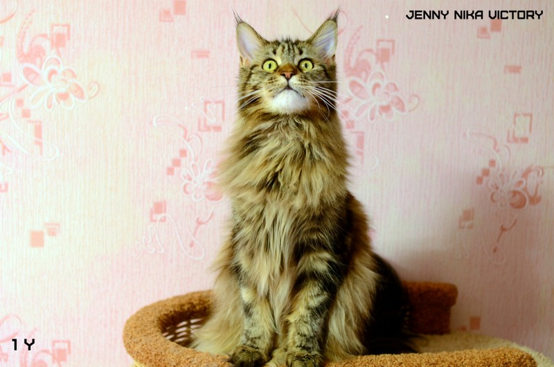 Jenny Nika Victory, 1 year