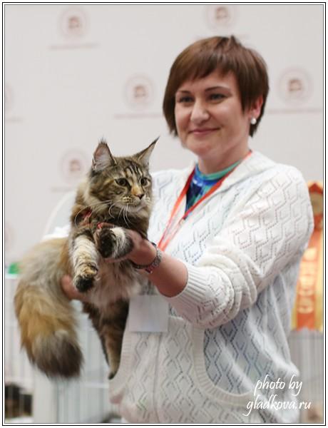 Rainbow XXXL*RUS, Бомонд кошек - 2015, VICTORY