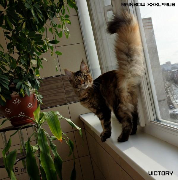 Rainbow-XXXL*RUS, VICTORY