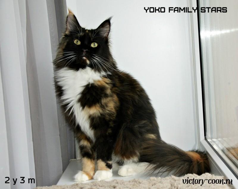 Yoko Family Stars, 2 года 3 мес., VICTORY