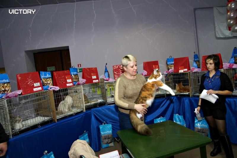 Выставка в Туле, VICTORY