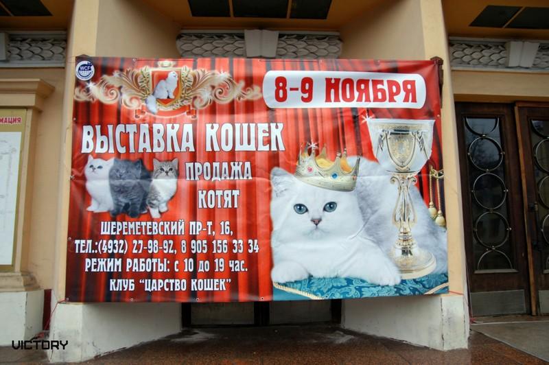 VICTORY в Иваново, 8-9 ноября, 2014