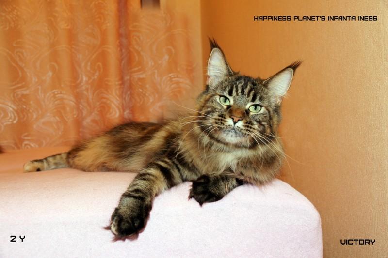 Главная кошка питомника