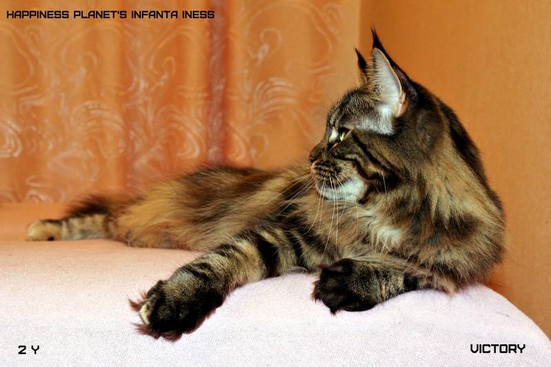 Наша главная кошка питомника