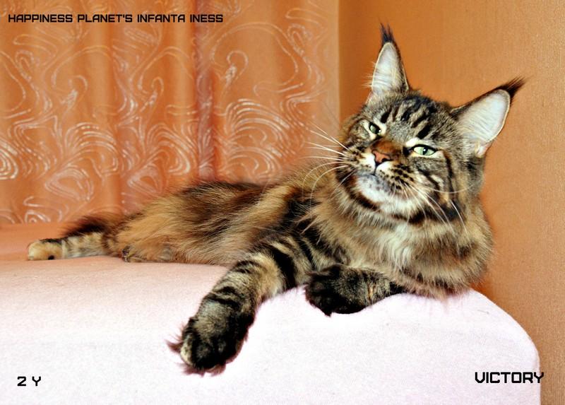 Главная кошка питомника Ласка