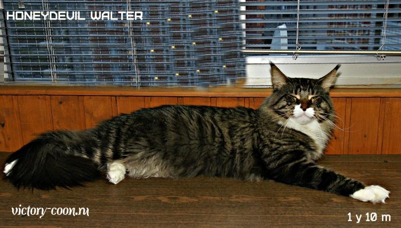 HoneyDevil Walter, VICTORY